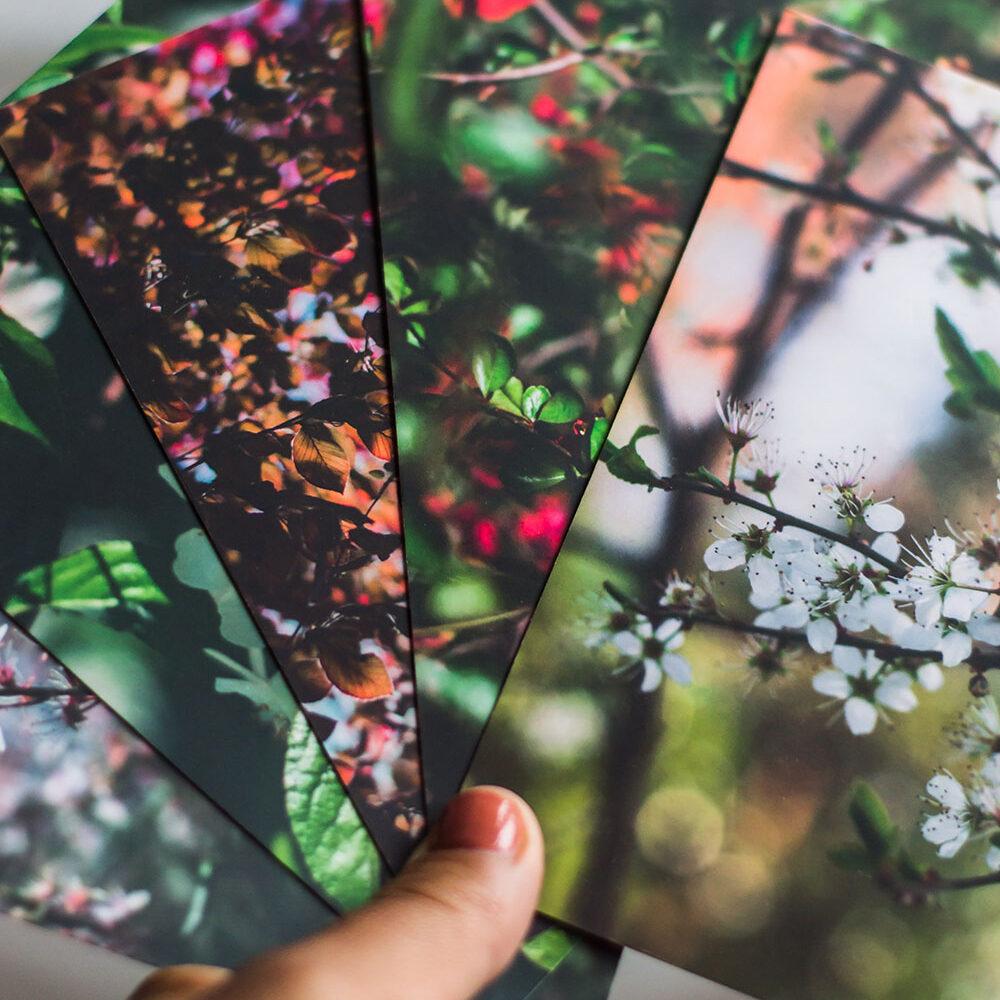 Reggy-photography-Postkaartenset-Natuur
